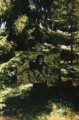 Ich ging im Walde so für mich hin ... (alf sigaro) Tags: agfaphotoleboxflash agfa agfaphoto lebox agfaphotolebox singleusecamera einwegkamera disposablecamera disposablecameras schwetzingen schwetzingerschlossgarten fotoausstellung frauundnatur–dienaturderfrau christinemay badenwürttemberg
