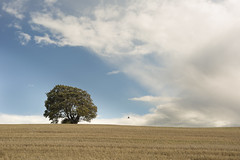 The Contrast of an autumn day (pgpicture) Tags: autumn downs dunstable landscape cloud tree magpie sky