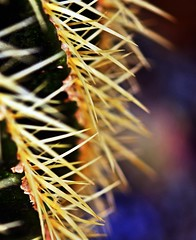 LBG Sept 2017 - 39 (Lostash) Tags: nature life plants flora cactus cacti succulents leicesterbotanicalgardens