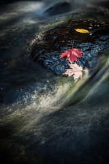 Fall colors on the river (Cyrielle Beaubois) Tags: 2017 cyriellebeaubois sainteadèle rivière septembre fall autumn river color long exposure leaf leaves maple red canada québec automne couleurs canoneos5dmarkii travel explore wanderlust wander