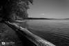 Flotation (dimitrismaggioris) Tags: nikond7100 greece volos seacoast seashore landscape magnesia pelion kalanera bw nikonians trees