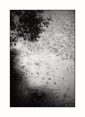 like a round of applause (stefkas) Tags: stefkas monochrome blackandwhite rainstorm rain water river trees willow vscox