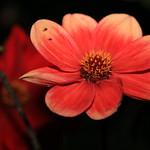 Blumen-Safari 2017-10-01 [12/12] thumbnail