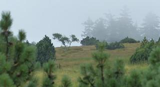 Hornisgrinde im Nebel - Black Forest fog