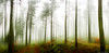 OLLARRETA PANO 1 (juan luis olaeta) Tags: art arte bosque forest basoa panoramicas paisages landscape canon canoneos60d photoshop lightroom topaz dima bizkaia paisvasco euskalherria fog