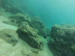 GOPR0461 (twobit94) Tags: snorkle waimea underthesea okinawavisitsoahu