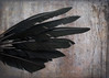 flew too high and burnt the wing.. (BluAlien) Tags: feather black wing art nikon d300 2470mm28