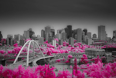 A New Level. (Fistfulofpowder) Tags: miniature 1870mm nikond80 shitsky super color ir supercolorir infrared lifepixel converted nikon d80 edmonton alberta canada faux tilt shift lightroom channel mixer swap white balance custom trees bridge epcor building laurence decor lookout point walterdale downtown hotel mcdonald north saskatchewan river pink foliage handheld telus wcb steel beams iron worker workers arch architecture beam windows stack stacks corporate sky water field gravel dirt machinery vehicle blur blurry glass metal awesome no clouds old new 590nm