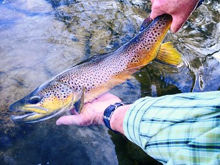 Montana Bighorn River Fishing Lodge 10