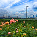 The UN Rose Garden, 59th Street Bridge and a cool sky-2 (1)