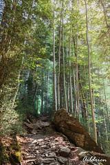 Subida a Cotatuero (Aildrien) Tags: rock senderismo actividad canon 1740 bosque nature nationalpark ejercicio parquenacional outdoor deporte ordesa huesca rocas 5d trees torla paisaje senda parqe hikking forest trekking arboles naturaleza landescape pyrenees pirineos sport park