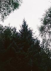 CNV00024 (SB_McAllister) Tags: fujica fujinon stx1 glencoe scotland filmisntdead lomography film 50mm