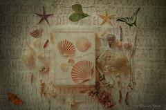 7 settembre 2017, composizione con conchiglie... (adrianaaprati) Tags: composition composit shells starfish fossil flower butterflies stilllife textured texture ammonite ancientromanwritings writings ancient rome ancientromans mirabilia