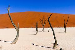 P1020958 (Seb_Jan) Tags: namibie namibia afrique africa afrika summer 2017 road trip roadtrip travel adventure holiday nature explore lumix wildlife safari picoftheday photooftheday dune desert naukluft sossusvlei red sand wonder merveille sesriem deadvlei dead vlei