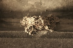Dust (LookSharpImages) Tags: lime oregon limeoregon abandoned abandonedspaces