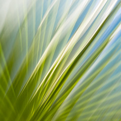 abstract lines (krøllx) Tags: africa icm marokko marrakech abstract colors green intentionalcameramovements light lines morocco nature dsc01160