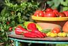 CKuchem-5600 (christine_kuchem) Tags: bauerngarten biogarten bioqualität ernte erntezeit fleischtomate garten gemüse gemüsegarten grün gurke nutzgarten paprika peperoni pflanze rarität sommer sorte sorten sortenvielfalt tomate vielfalt zucchini bio biologisch frisch gelb gesund lecker natürlich orange reif rot selten unbehandelt