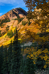 Fall Along Ohio Pass (rosacruzjl) Tags: aspen autumn colorado crestedbutte fall gunnison ohiopass color colorful country forest gold habitat landscape meadow nature outdoors pine rural season sky tree weather wilderness yellow