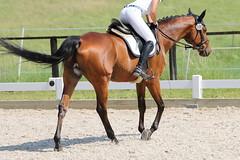 _MG_5780 (dreiwn) Tags: dressage dressurprüfung dressurreiten dressurpferd dressyr ridingarena reitturnier reiten reitverein reitsport ridingclub equestrian horse horseback horseriding horseshow pferdesport pferd pony pferde dressur dressuur tamronsp70200f28divcusd