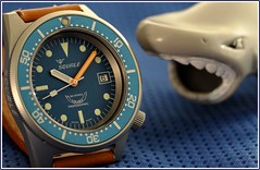 Squale, 50atmos. 6 (EOS) (Mega-Magpie) Tags: canon eos 60d indoors squale 1521 50atmos watch time timepiece wristwatch swiss made diver dive professional shark blue orange