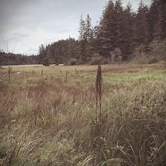 (Gary Sharp) Tags: timezero instantapp polaroid iphone oregon saltmarsh southsloughestuary