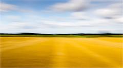 the most amazing color blue (Beppe Rijs) Tags: deutschland germany schleswigholstein schlei wolken wolkendecke landschaft landscape natur nature field feld gras horizont horizon grün green clouds farbig colored line linie rape canola raps pastell verzerrt verschwommen blurred blur summer sommer
