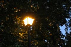 Street Light at Evening (snow41) Tags: light magnolia streetlight evening lamppost akob lightpost