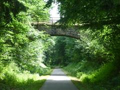 Enztalradweg bei Halenbach (Wuppataler) Tags: enztalradweg bei halenbach radreise fahrrad eifel grün green baum
