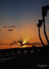 DSC_0355B-EditFAA (john.cote58) Tags: sunset florida keywest keys ocean atlantic water sport holiday travel clouds outside outdoors design poster reflections sea birds gull shore pier beach sky light silhouette people vacation palmtrees