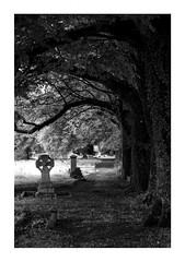 Bodmin Cemetery (Mark Curnow Photography) Tags: bodmin blackandwhite greyscale cornish graveyard cornwall canonphotography outdoorphotography landscape highcontrast bright trees flora canon eos 7d light nature headstone grave memorial gothic