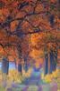 Herbstwald (blichb) Tags: 2009 aumühle deutschland foliage herbst laub schleswigholstein wald weg blichb canon40d
