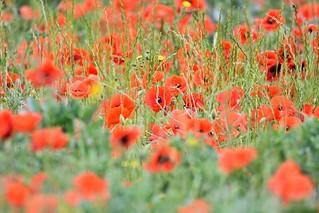 'Watercolour' meadow.