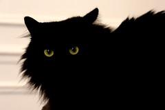 staring (Joanna Muthos) Tags: black bw demon démon eyes greeneyed green light darkness dark owl cheshire cat gato angora staring fixer regard funny strange wild