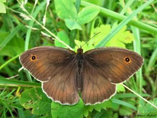 Butterfly 1440