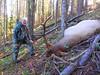 Idaho Big Game Hunting and Fishing 25