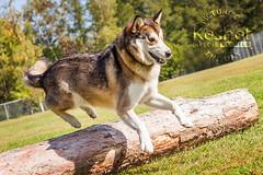 Dog Kennels Wishaw Lanarkshire