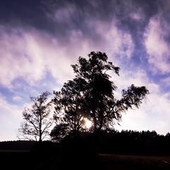sunset (Darek Drapala) Tags: sun sky sunset silhouette skyskape color nature trees tree panasonic poland polska panasonicg5 baltic lumix light landscape