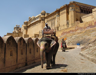 Amber Fort & Elephants, India