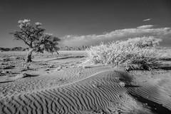 Desert infrared (Matt OZW) Tags: infrared desert namibia sesriem