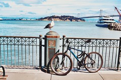 Reserved #photography #naturephotography #pier24 #pier #sanfrancisco #sf #seagull #bike #reserved (brinksphotos) Tags: photography naturephotography pier24 pier sanfrancisco sf seagull bike reserved