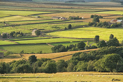 Shades of greens fields - England (cattan2011) Tags: landscape landscapephotography travel travelphotography traveltuesday travellovers nature natureperfection naturephotography naturelovers england nidderdale