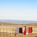 Laundry in the Desert