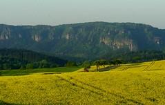 Schönste Jahreszeit (michaelschneider17) Tags: natur sachsen deutschland reisen