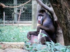 1994_Singapore_2016-07-18_Photo_272 (Matthias & Paula) Tags: singapore sentosa kuala lumpur malaysia cameron highlands zoo japanese gardens
