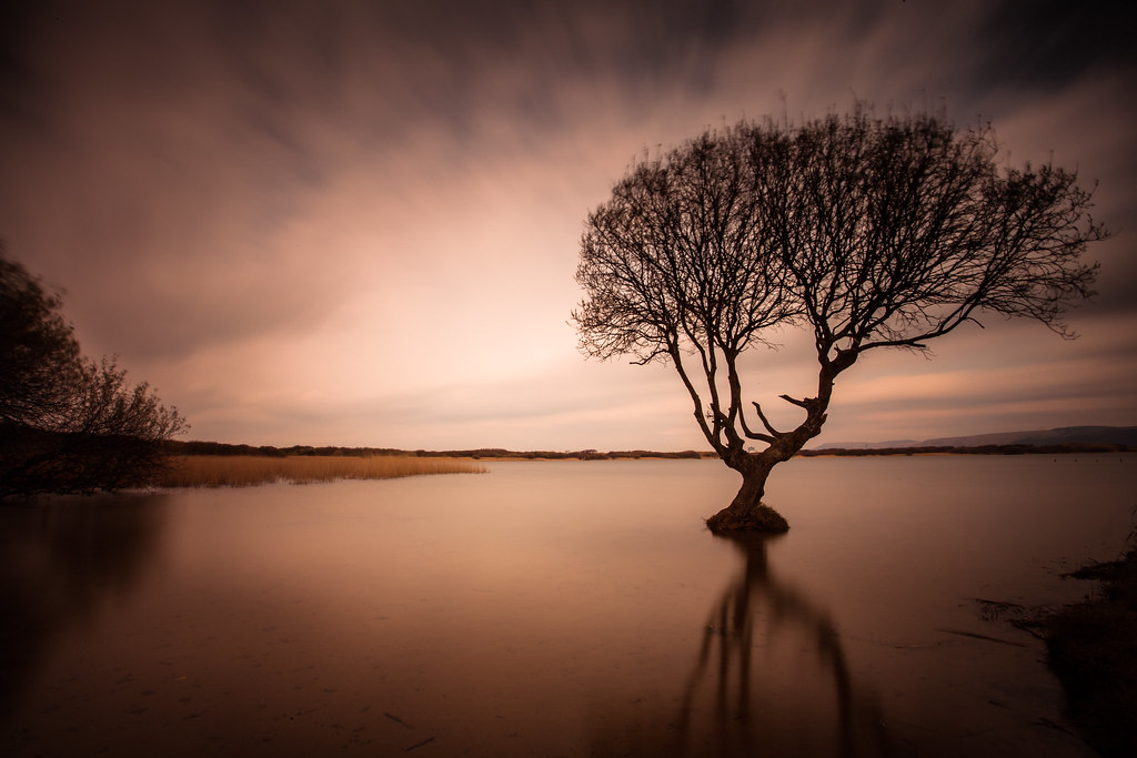The World's Best Photos of solitude and tree - Flickr Hive ...