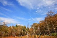 Off We Go (arbivi) Tags: nikko tochigi japan senjogahara marshland hike hiking trekking autumn fall foliage koyo landscape tree clear sky arbivi raymondviloria
