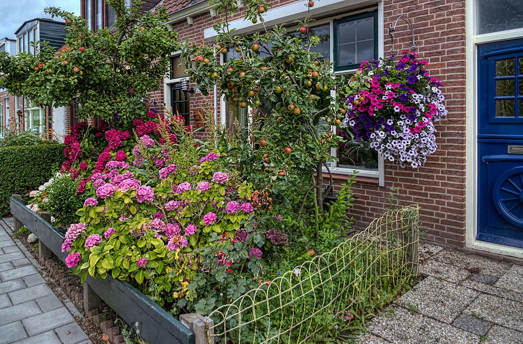 The World S Best Photos Of Blumen And Vorgarten Flickr Hive Mind
