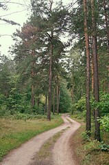 Lost (Pictures in my head) Tags: poland augustow forest nature trees green life road relax bike travel trip sport summer autumn lost hometown arbre route forêt view explore