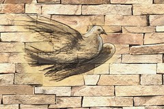 Scribble a dove on a brickwall (boitchy) Tags: scribble dove peace brickwall brick graffiti graphicart wall politics drawing publicdomain