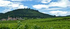 Les 3 châteaux en Alsace. (JPH4674) Tags: paysage alsace vignobles troischâteaux hautrhin châteaux ruines
